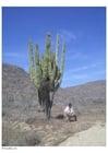 Foto Cáctus en el desierto