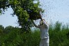 Foto cazar enjambre de abejas