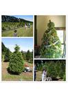 Foto Comprar árbol de navidad
