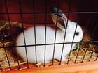 Foto conejo en jaula