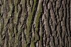 Foto corteza de árbol
