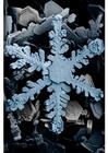 Foto Cristales de nieve en un microscopio