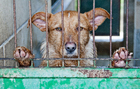Foto dolor animal
