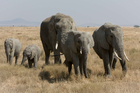 Foto elefantes