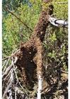 Foto Enjambre de abejas