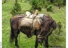 Foto Excursión a caballo