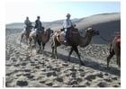 Foto Excursión en el desierto con camellos