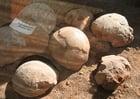 Foto Fósiles de huevos de dinosaurio