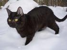 Foto gato negro