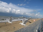 Foto Gaviotas en la playa