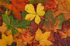 Foto hojas de otoño