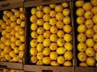 Foto Limones