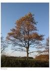 Foto Otoño - árboles