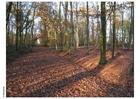 Foto Otoño en el bosque