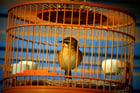 Foto pájaro en jaula - cautiverio