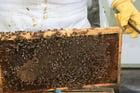 Foto panal de abejas