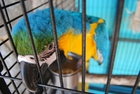 Foto papagayo en jaula
