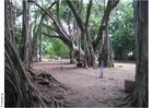 Foto Parque Puna