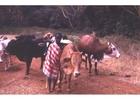 Foto Pastor en Kenia