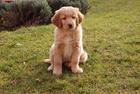 Foto perro - cachorro