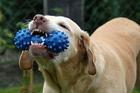Foto perro con juguete
