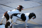 Foto perros con correa