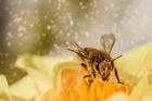 Foto polen