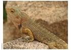 Foto Reptil
