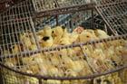 Foto sufrimiento animal