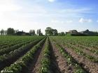 Foto Tierra de cultivo