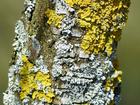 Foto tronco de árbol con musgo
