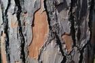 Foto tronco de árbol