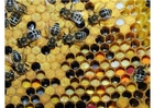 Foto Varios tipos de polen almacenados