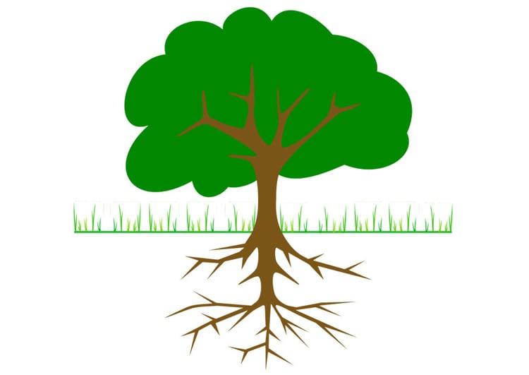 imagen árbol con raíces img 20764