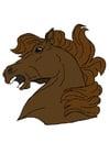 Imagen cabeza de caballo
