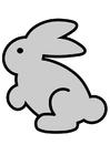 Imagen conejo