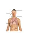 Imagen cuerpo humano