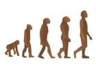 Imagen Evolución del hombre