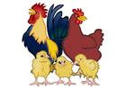 Imagen gallo, gallina y polluelos