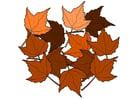 Imagen hojas de otoño