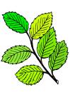 Imagen hojas de verano