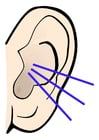Imagen oreja - sonido