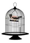 Imagen pájaro en jaula