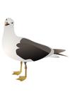 Imagen pájaro - gaviota
