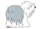 Imagen perro - bobtail