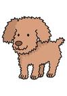 Imagen perro