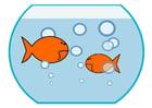Imagen pez de colores