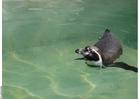 Foto Pingüino