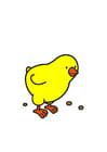 Imagen pollo