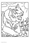 Dibujo para colorear Tigre
